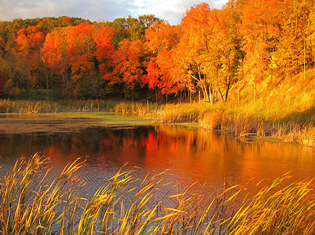 Maplewood State Park. Photo courtesy of Minnesota Department of Natural Resources.