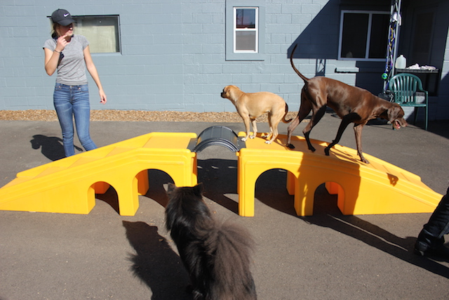 Emma Vogelgesang at Urban Hound Playground, a family-run business.