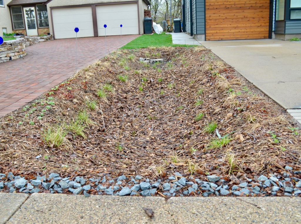 A shot of of the rain garden outside of Dave Oltmans' house. Oltmans said he planted about 500 to 600 plants in the approximately 10-foot by 30-foot garden.