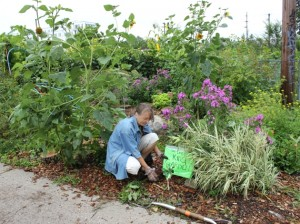 Volunteer Mary Gazca created a garden for kids in a common area of the Soo Line Community Garden.