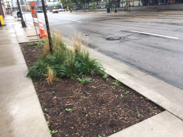 The sparse greenery at Washington & 3rd, near Eastside. Photo by Steve Brandt