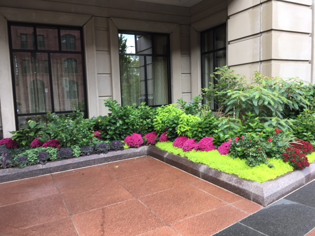 Plantings outside of the Carlyle, 100 3rd Ave. S. Photo by Steve Brandt