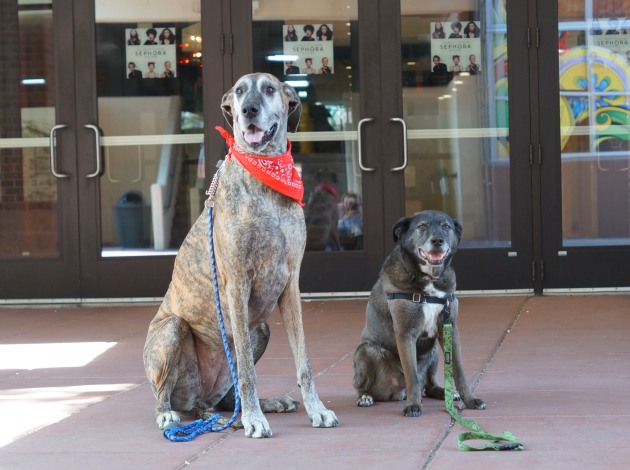 Pups can enter common areas and select stores. Photo courtesy of Sidewalk Dog Media