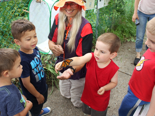 Mary Arneson (center) releases monarchs with the help of neighborhood kids Calvin and Austin Brix and Ian and Leo Kershner (l to r).