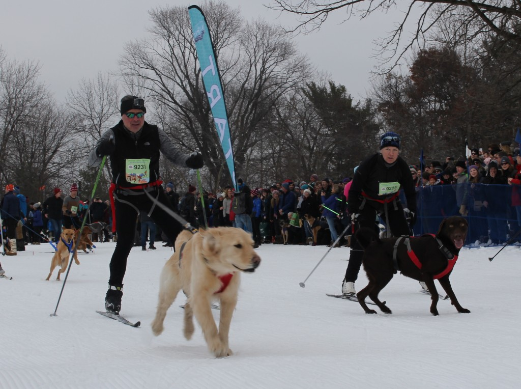 James Hess skis with his dog in the Chuck & Don's Skijoring Loppet and One-Dog National Championship Feb. 2 at Theodore Wirth Park. Photo by Nate Gotlieb