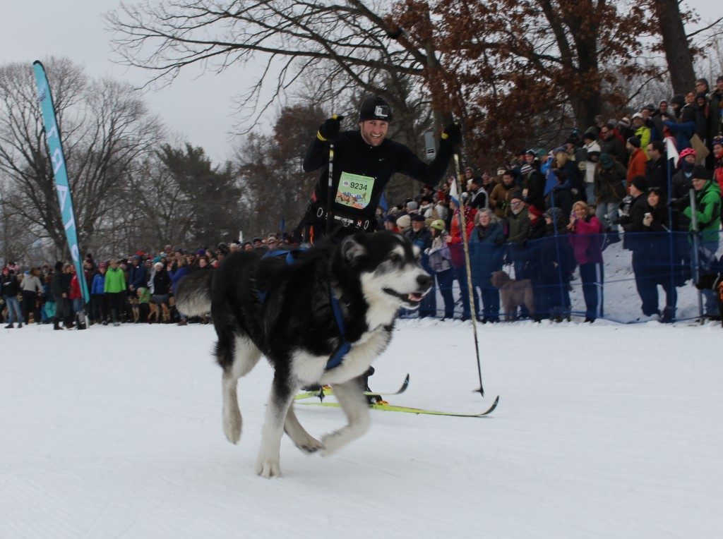 John Bostrom of Minneapolis skis in the Chuck & Don's Skijoring Loppet and One-Dog National Championship Feb. 2 at Theodore Wirth Park. Photo by Nate Gotlieb