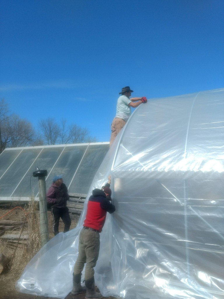 Covering a new greenhouse at dancing the Land Farm