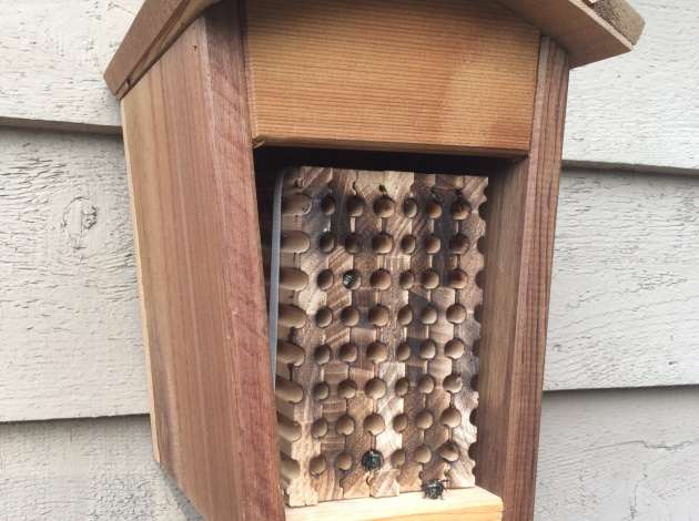 Put up a house and mason bees will move in.  Credit: Photo courtesy of Crown Bees.