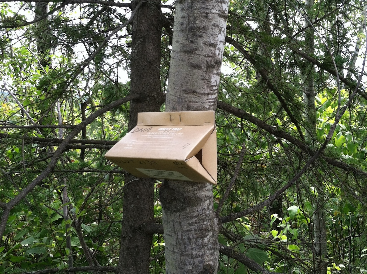 A look at the traps the Minnesota Department of Agriculture uses to catch gypsy moths. Photo courtesy Minnesota Department of Agriculture