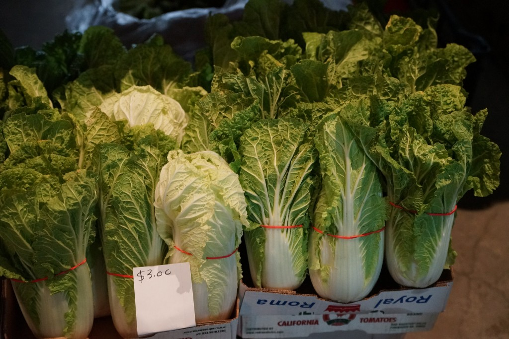 Napa Cabbage indoor winter