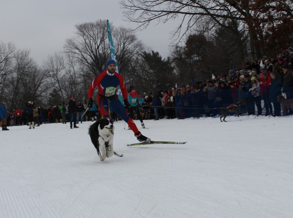 Ryan Kraft of Andover skis in the Chuck & Don's Skijoring Loppet and One-Dog National Championship Feb. 2 at Theodore Wirth Park. Photo by Nate Gotlieb