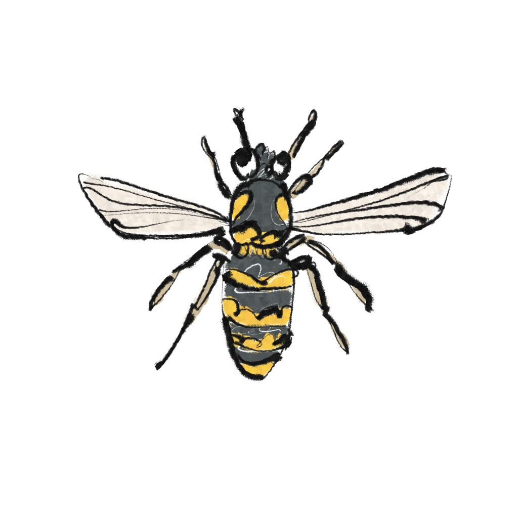 the wasp illustration
