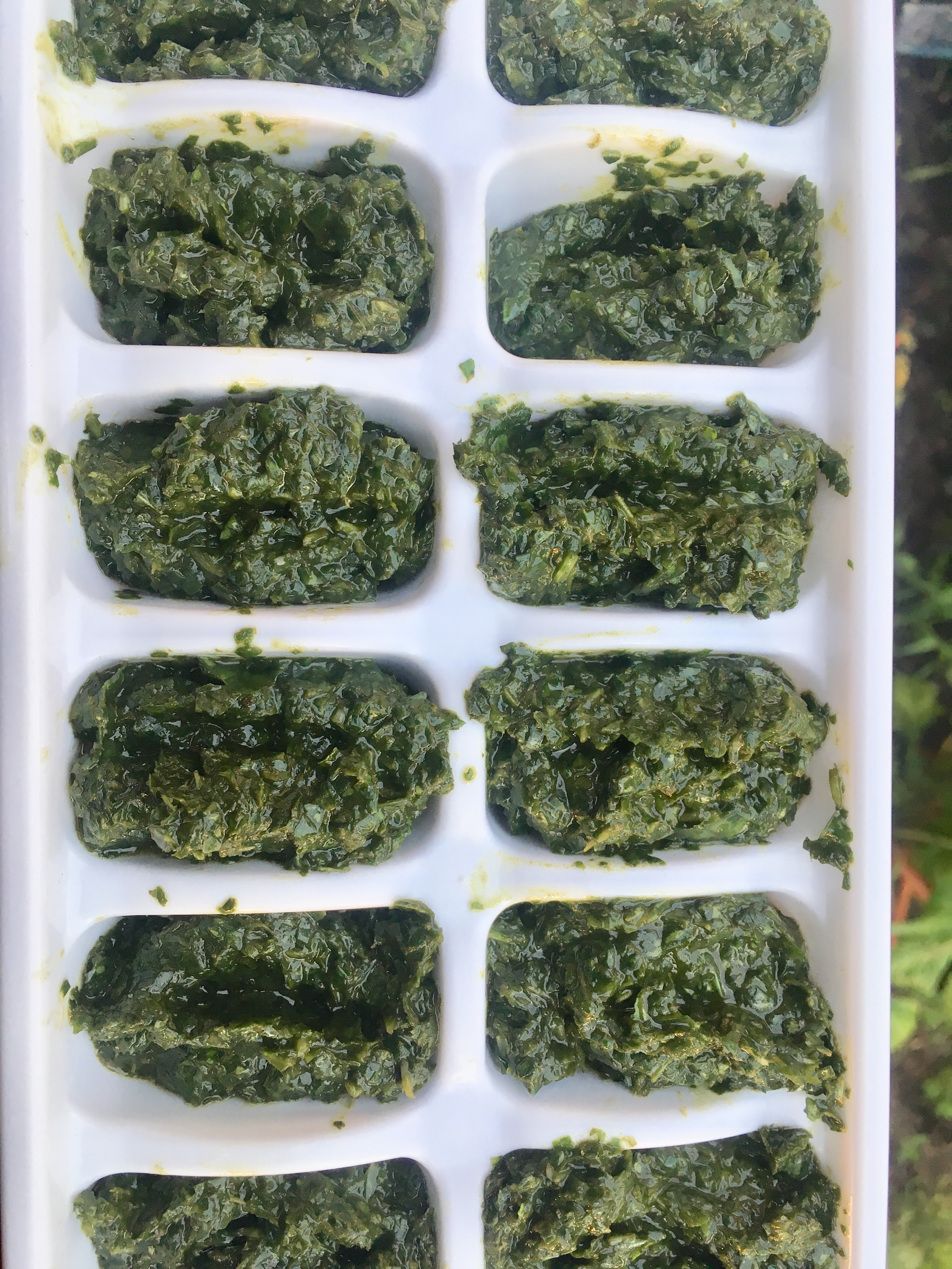 basil in ice cube trays