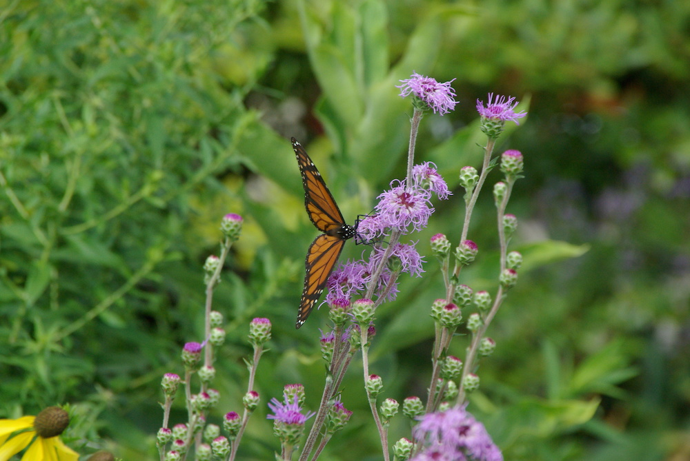 Native plants, shrubs and grasses