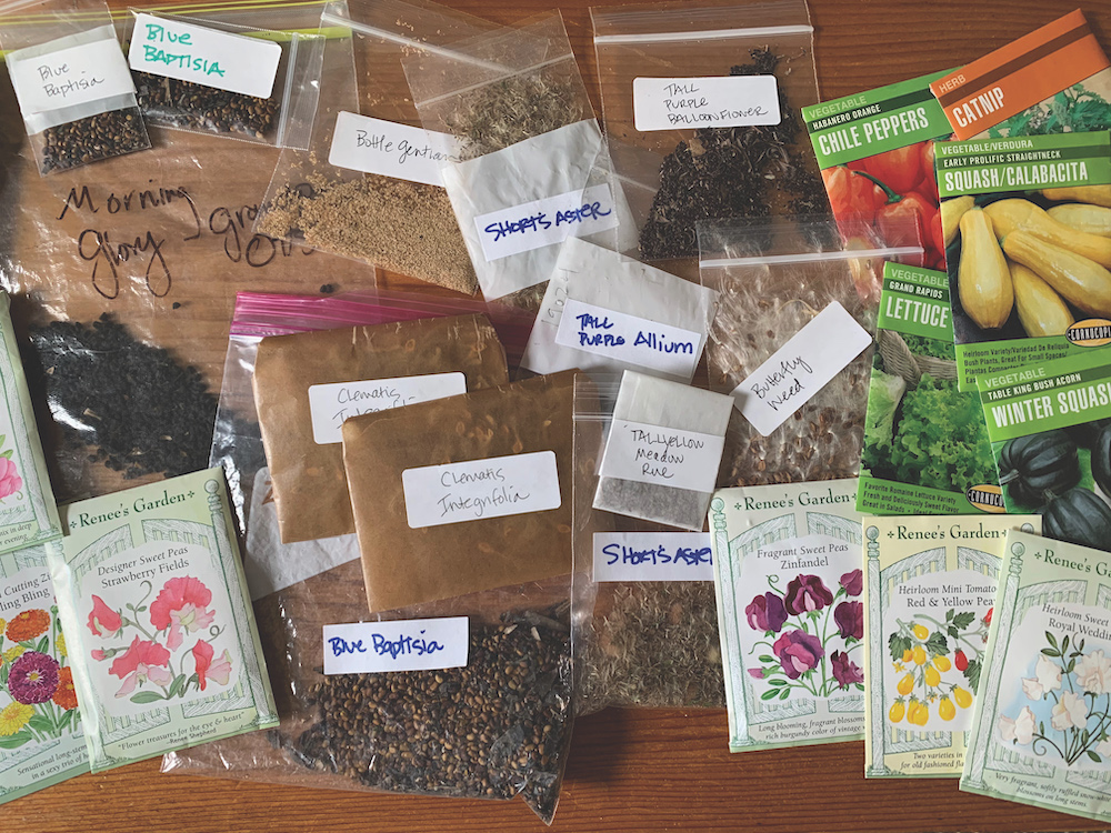 The Little Free Seed Library